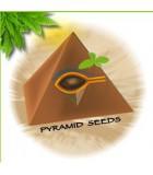 PYRAMID SEED