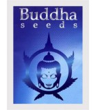 Buddha Seeds Bank